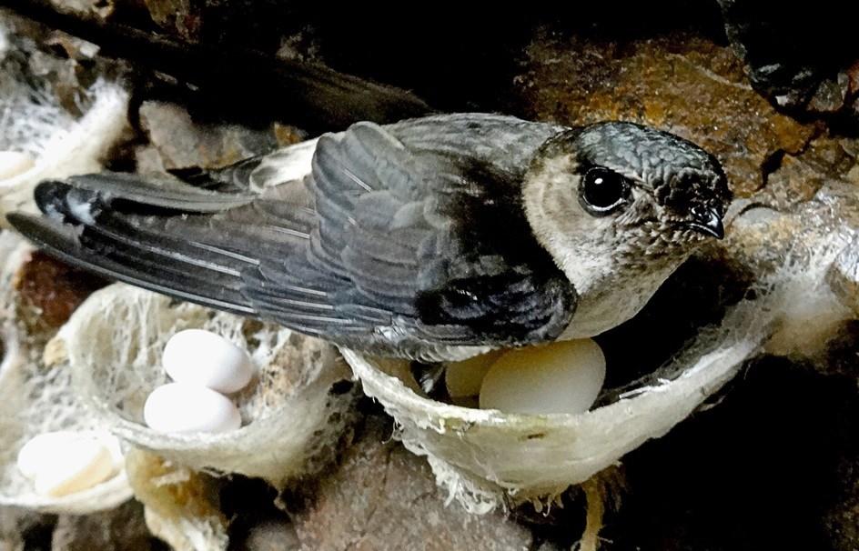 Bật mí những điều chưa biết về loài chim nhỏ - bay xa 3