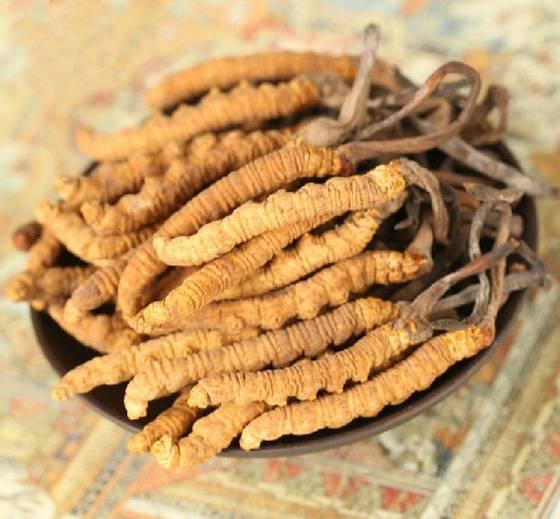 Đông trùng hạ thảo Tây Tạng thiên nhiên nguyên con hộp 50g 2