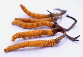 Đông trùng hạ thảo Tây Tạng thiên nhiên nguyên con 10g - Con trung 2