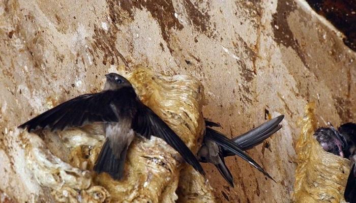 Bật mí những điều chưa biết về loài chim nhỏ - bay xa 2