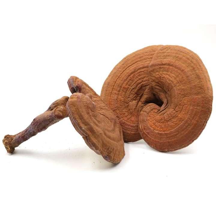 Thị trường có nhiều nấm linh chi, nên dùng loại nào tốt nhất ??? 2