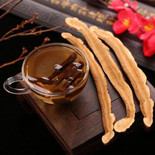 Nấm linh chi được mọc ra từ những loại cây gỗ nào ? 1