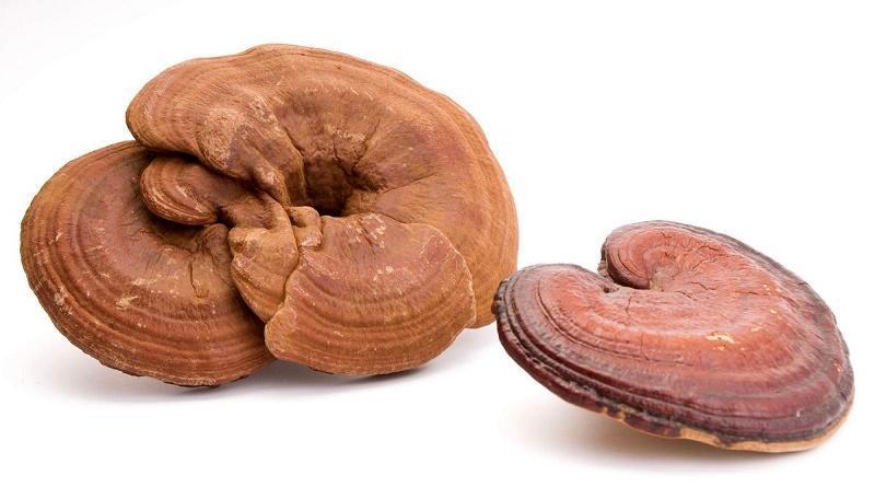 Những nghiên cứu về nấm linh chi có thể chữa được bệnh gì ??? 1
