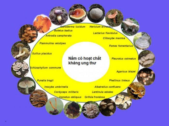 Y học cổ truyền và hiện đại nói gì về nấm linh chi ??? 2