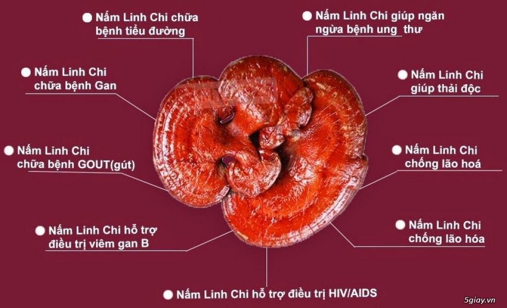 Nấm linh chi đỏ có tác dụng chữa bệnh tốt như mọi người đồn thổi? 1