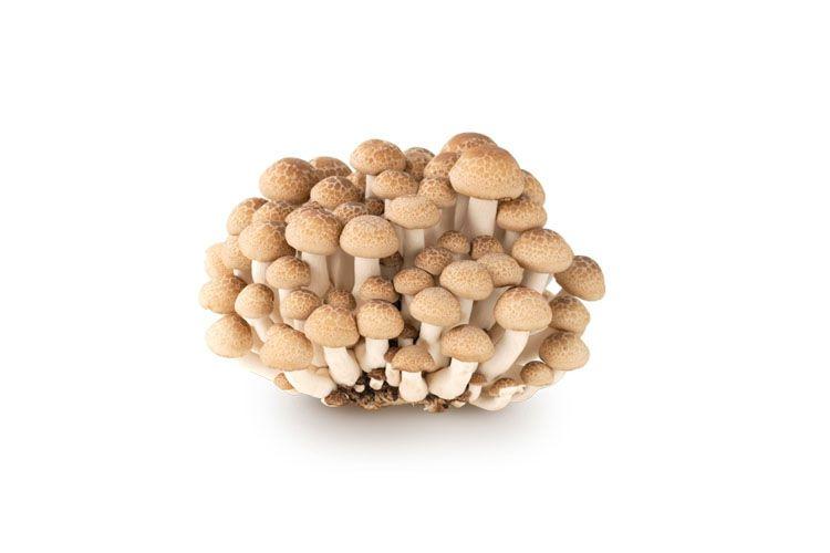 Bật bí công thức chế biến món nấm linh chi xào gà 1