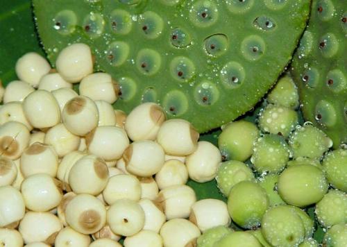 Cách chưng yến hạt sen hạt chia 2