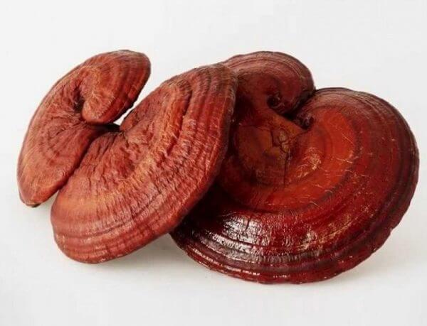Nấm linh chi đỏ - Công dụng, cách dùng và cách bảo quản đúng nhất 2