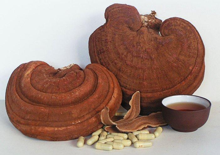 Nấm linh chi đỏ - Công dụng, cách dùng và cách bảo quản đúng nhất 1