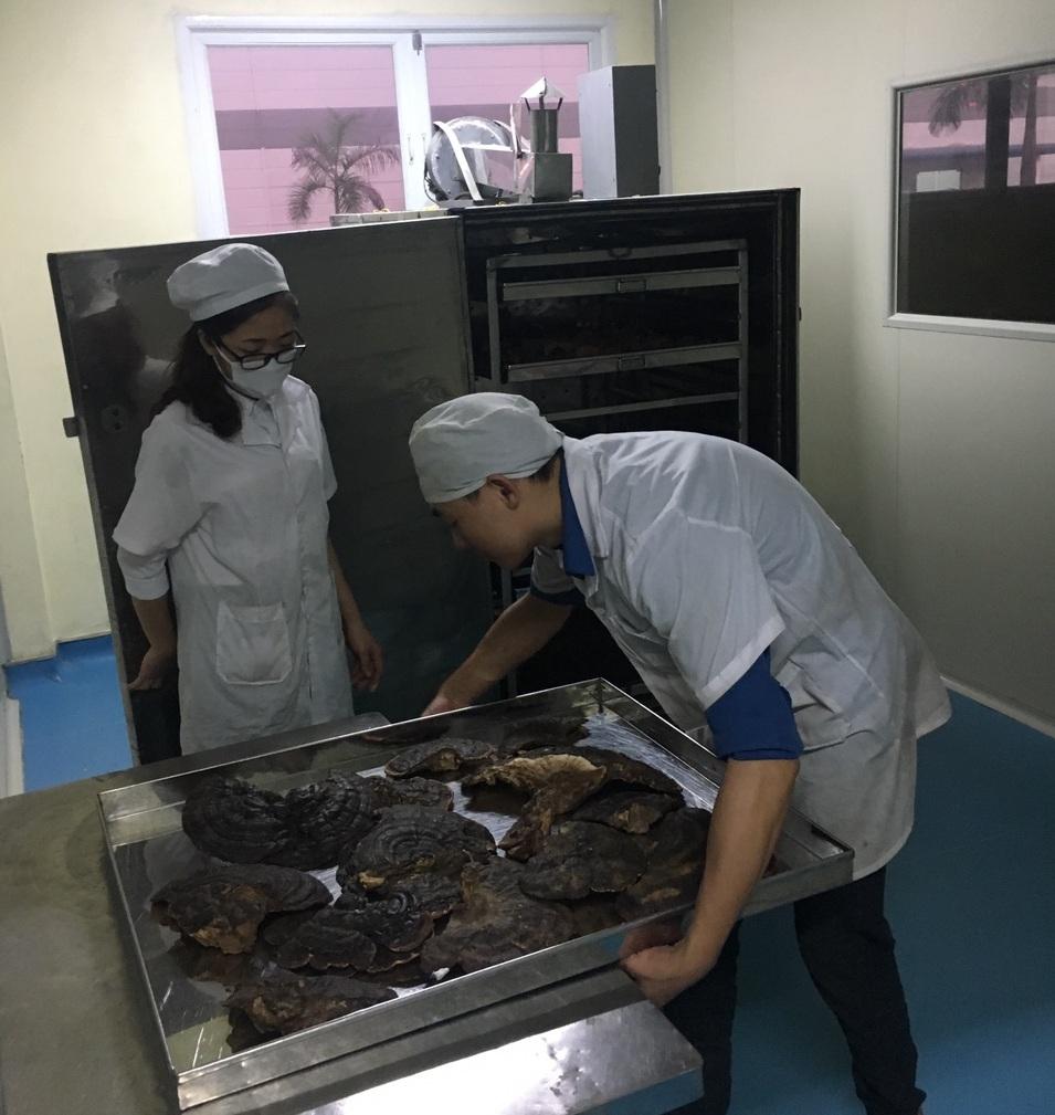 Khám phá kỹ thuật trồng nấm linh chi độc đáo của người Hàn Quốc 6