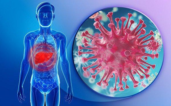Nấm linh chi đỏ - Thảo dược tuyệt hảo cho bệnh nhân ung thư 1