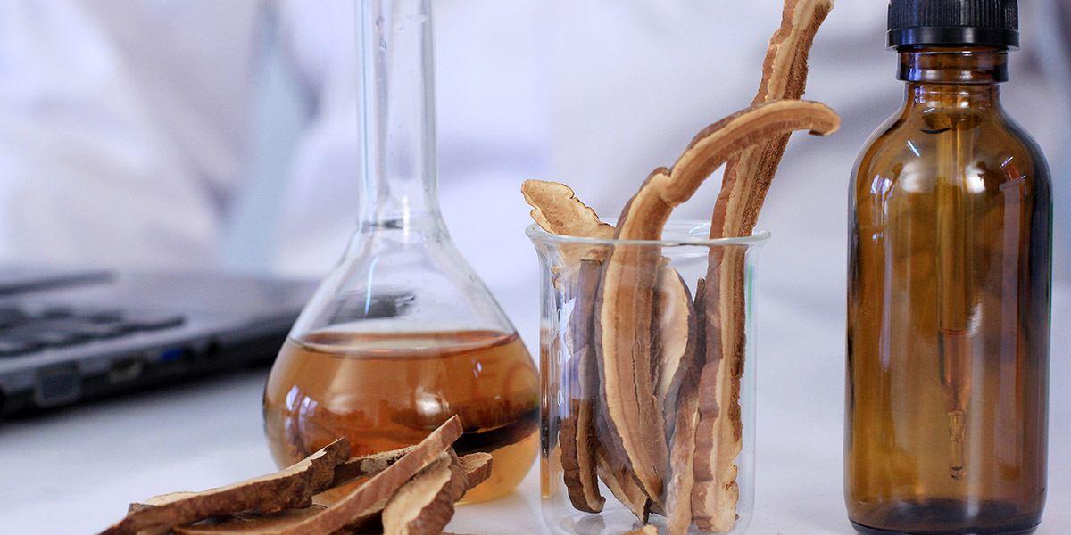 Công dụng của nấm linh chi trong ổn định huyết áp, xơ vữa động mạch 4